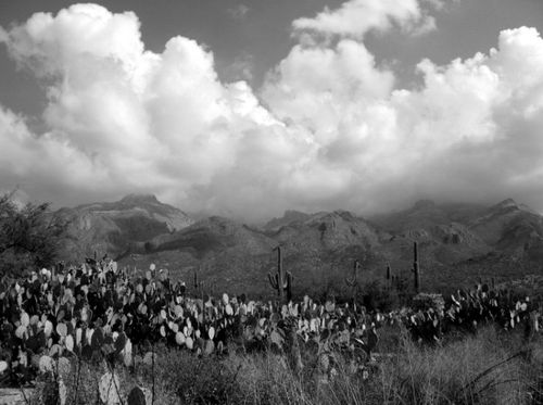 Bw cloud cactus field